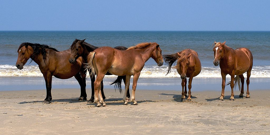 Wild Mustangs on the beach